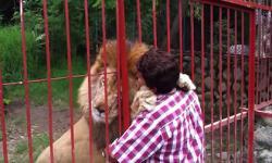Cảm động tình cảm của người và sư tử