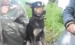 Khi chó say rượu
