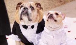Đám cưới siêu lãng mạn của... 2 chú chó