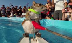 Sóc lướt ván đẳng cấp
