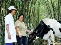 Vinamilk tăng giá mua sữa bò nông dân miền Bắc