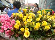 Hoa trên phố - vẻ đẹp thường ngày