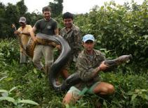 Bắt được trăn khổng lồ dài 5m, nặng 1 tạ
