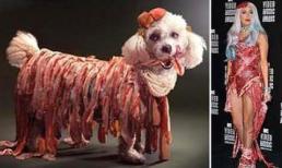 Lady Gaga phiên bản... cún