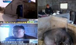 Con ép mẹ già trăm tuổi sống trong chuồng lợn