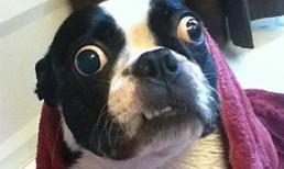 Chú cún lập kỷ lục thế giới vì mắt to
