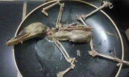 Ảnh vui châu Á: 'Hóa thạch' vịt sau bữa nhậu