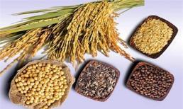 Thực phẩm tạo cơ bắp cho người ăn chay