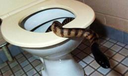 5 vụ tai nạn kỳ cục trong nhà vệ sinh
