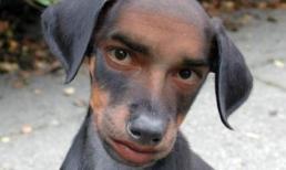 Truyện cười toàn C: Con chó cắn cụ Chánh