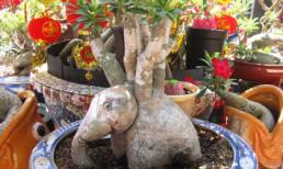 Những 'con thú ngậm hoa' kỳ lạ ở Sài Gòn