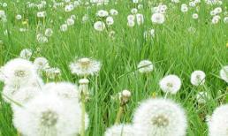 5 loại thảo dược mang đến cho bạn khuôn ngực mịn màng tròn trịa