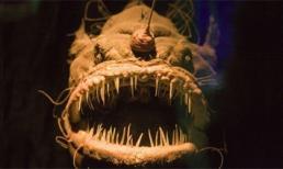 Những sinh vật biển sâu có ngoại hình xấu xí và gớm ghiếc nhất thế giới