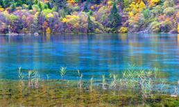 Vẻ đẹp thiên đường của mùa thu Tứ Xuyên