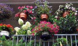 5 kiểu vườn ban công tuyệt mỹ đáng để tham khảo