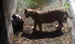 Học sinh Ấn Độ chui vào chuồng hổ bị cắn chết