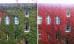 Ngỡ ngàng trước vẻ đẹp thiên nhiên khi mùa thu thay sắc lá