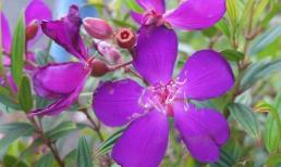 5 loại cây giải độc cực hiệu quả ngay trong nhà bạn
