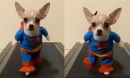 Cún cưng hóa siêu anh hùng cực đáng yêu