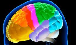 Phát hiện mới về quá trình lão hóa của não bộ