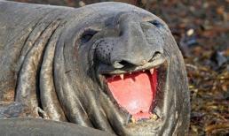 Chùm ảnh những loài động vật hạnh phúc nhất thế giới (P.1)