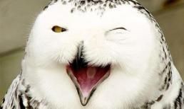 Chùm ảnh những loài động vật hạnh phúc nhất thế giới (P.2)