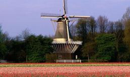 Mùa Hè rực rỡ ở xứ sở hoa tulip