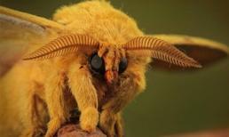 Những loài động vật kỳ dị nhất thế giới