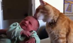 Cún, mèo và hình ảnh lạ lẫm dễ thương khi lần đầu thấy trẻ sơ sinh
