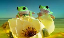 Thế giới cổ tích của những chú ếch
