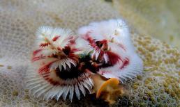 Tuyển tập sinh vật biển đảm bảo làm bạn thích thú và giật mình