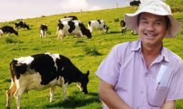 Vì sao bầu Đức dốc hàng ngàn tỷ nuôi bò sữa?