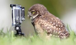 Ngộ nghĩnh động vật làm nhiếp ảnh gia