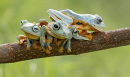 Ngộ nghĩnh những chú ếch 'ôm vai bá cổ' để chụp hình