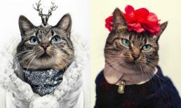 Những cô mèo quý tộc thời trang nhất thế giới
