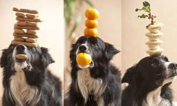 Chú chó có tài giữ thăng bằng đáng ngưỡng mộ