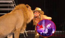 Sư tử bất ngờ tấn công HLV sở thú khi đang diễn xiếc