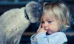 Tình bạn 'ngọt ngào' của em bé và động vật