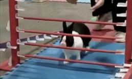 Khi thỏ đi thi vượt rào
