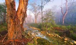 Những bức ảnh thiên nhiên đẹp hút hồn trên khắp thế giới