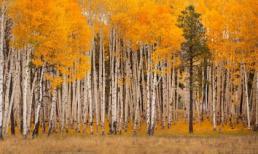 Những khu rừng bước ra từ cổ tích