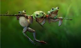 Ngắm những bức ảnh tuyệt đẹp về động vật