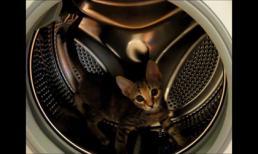 Bài tập thể dục của mèo con trong máy giặt