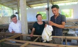 8X kiếm hàng trăm triệu đồng nhờ nuôi thỏ