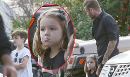 Harper bĩu môi đáng yêu bên bố Beck