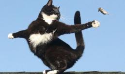 Mèo vờn chuột sống động như trong phim Tom và Jerry