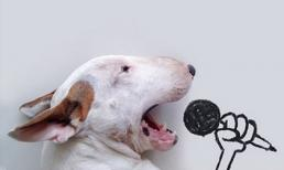 Thú vị bộ ảnh của 'super dog'
