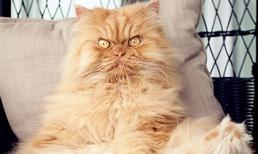 Vẻ đẹp 'kinh hoàng' của con mèo giận dữ nhất thế giới