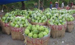 Giá trái cây giảm thê thảm
