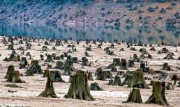 Những bức ảnh về ô nhiễm môi trường khiến bạn phải suy ngẫm